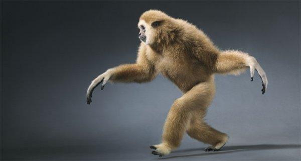 Фотограф показал вымирающих животных в человеческих позах