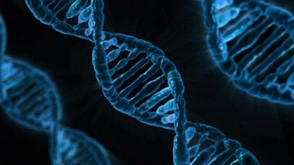 Ученые представили эволюционную машину неестественного отбора