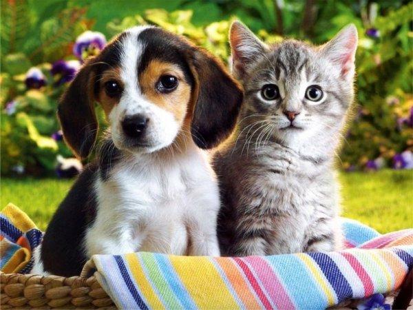 Ученые узнали, кто умнее: собаки или кошки
