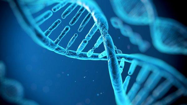 Ученые смогли ввести новые буквы в генетический код
