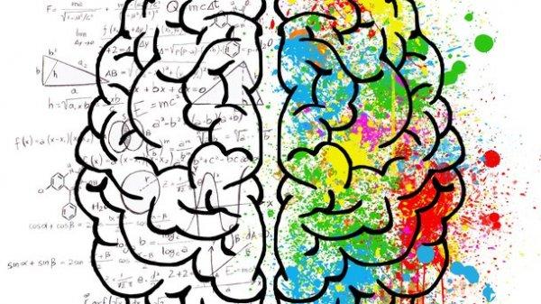 Больше знаешь, дольше живёшь: Учёные обнаружили связь между интеллектом и жизнью
