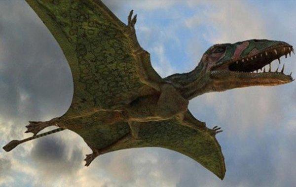 Ученые обнаружили крупнейшую в истории кладку яиц птерозавров