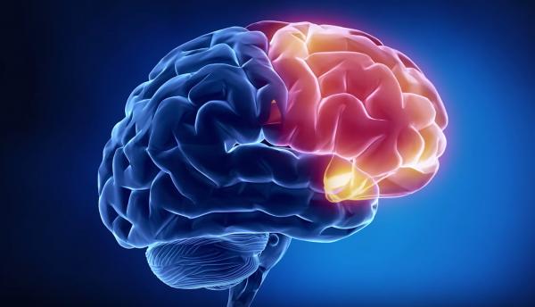 Бразильские ученные выяснили что ожирение у подростков связанно с нарушением структуры мозга