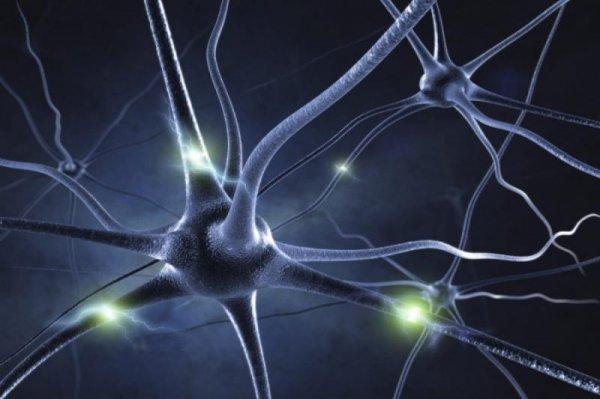 Немецкие исследователи отправят в космос нервные клетки человека