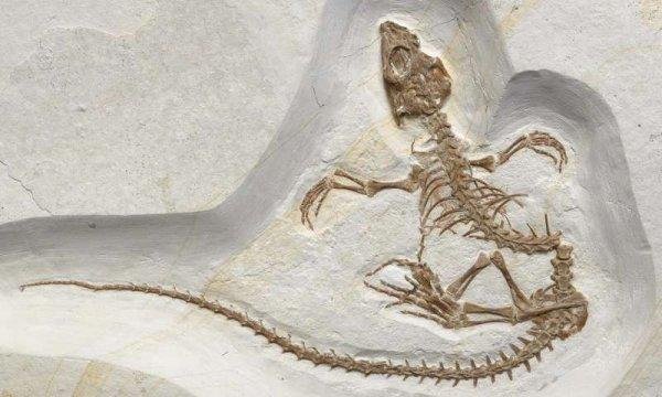 Учёные нашли останки болотных ящериц, переходящих из суши в море