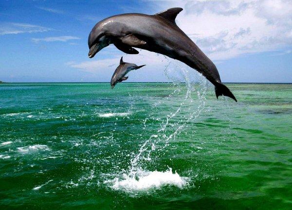 Новый способ распознания голосов дельфинов
