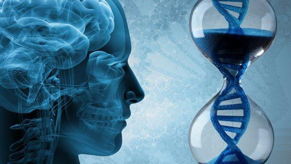 Ученые назвали причины угасания памяти и старения мозга