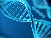 Британские ученные разработали метод лечения гемофилии