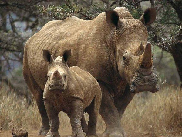 Учёные поведали о виде животных, вымирающем уже миллион лет