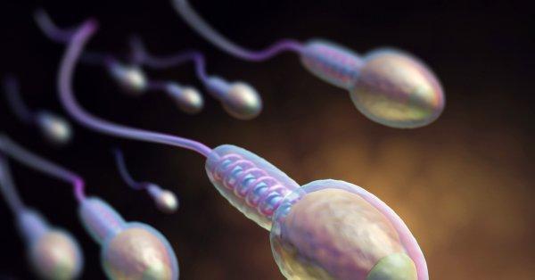 Ученые обнаружили неизвестное ранее полезное свойство спермы