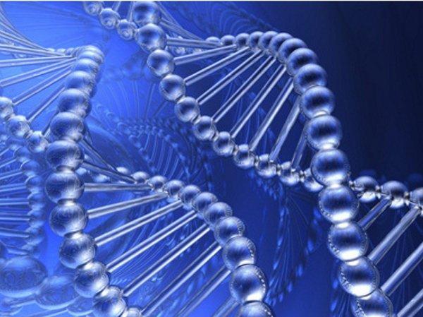 Ученые раскрыли тайну появления человека на Земле