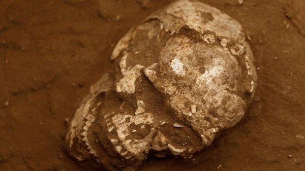 Черепа для ритуалов и кекс с изюмом: Археологи рассказали про открытия и находки 2017 года
