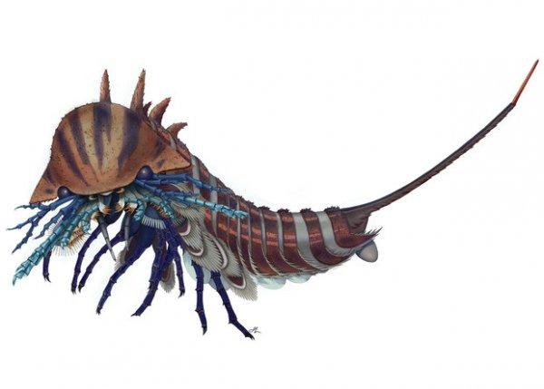 Ученые нашли хищника-амфибию возрастом 508 миллионов лет