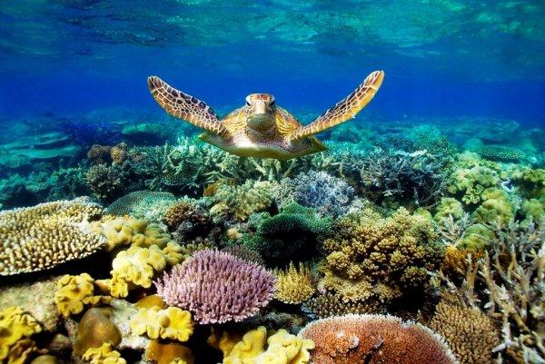 Учёные вывели вид кораллов, устойчивых к глобальному потеплению