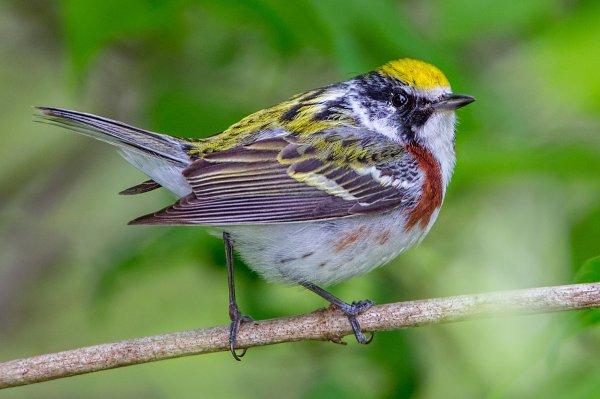 Учеными найден новый вид птиц в лесах Амазонии
