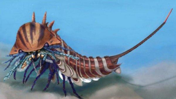 В Канаде нашли неизвестного морского хищника возрастом 508 миллионов лет