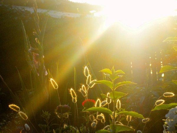 Ученые: Растения в условиях конкуренции выбирают стратегию роста