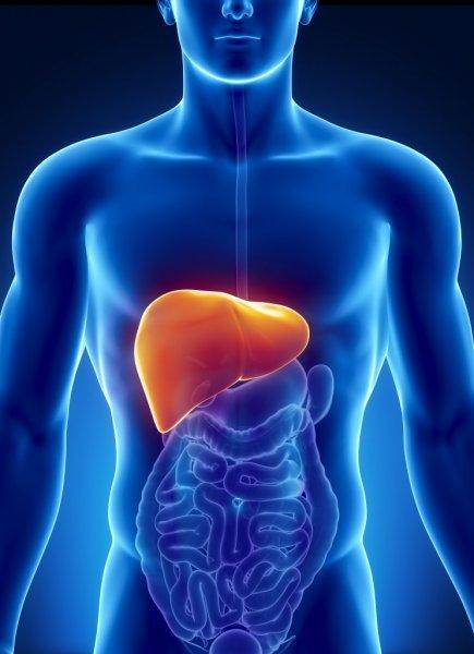 Ученые: Человек может прожить без желудка и еще шести органов